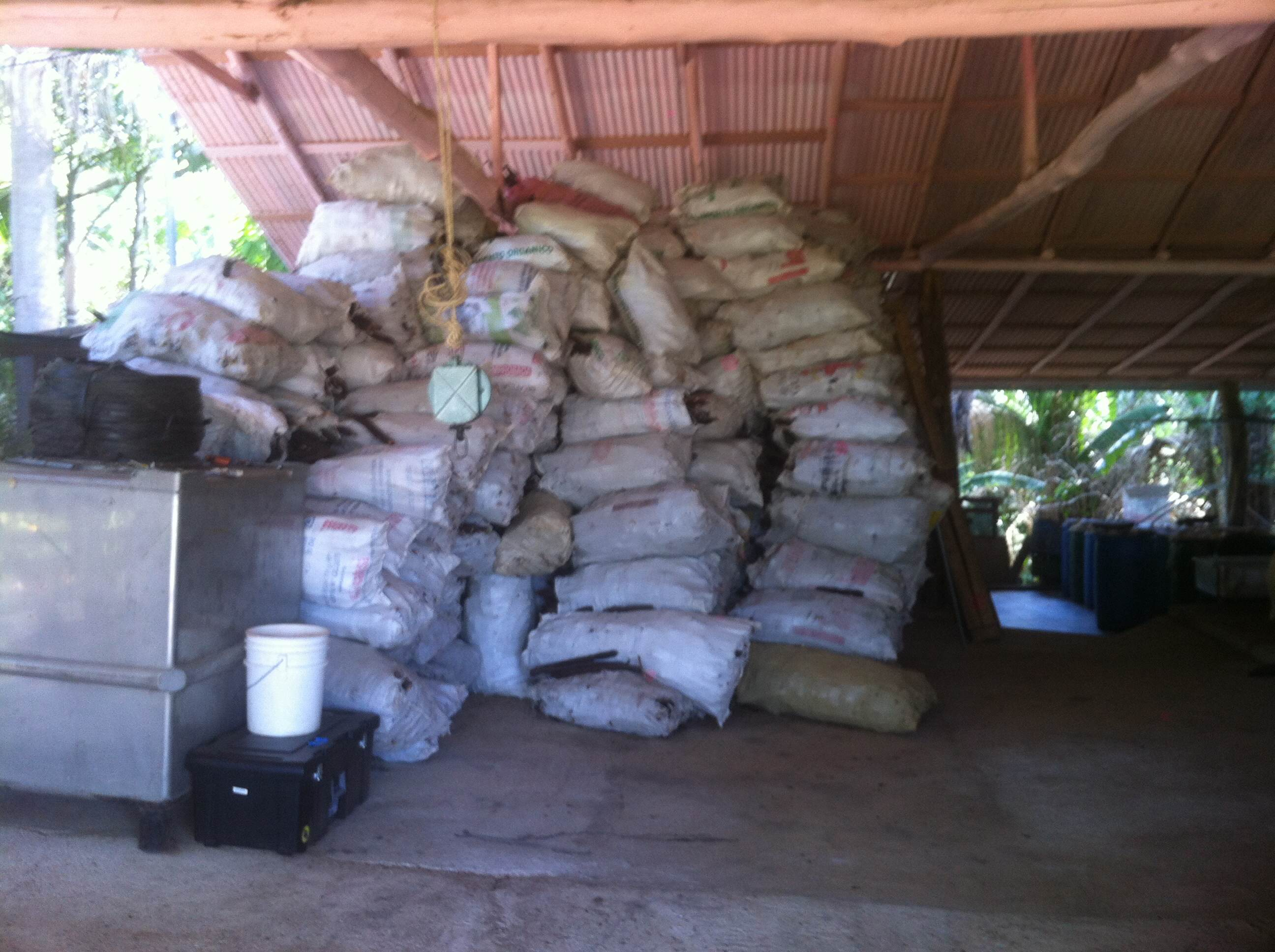Sacks of carao pods